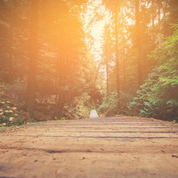 Weg im Wald, sinnbildlich für die Ayurveda Psychologie